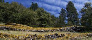 Lava Bluffs Trail - Calaveras Big Trees