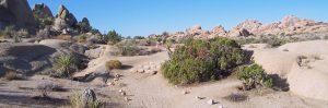 Trail in Joshua Tree NP